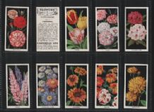 Tobacco cigarette cards Flowers 1936 beautiful set